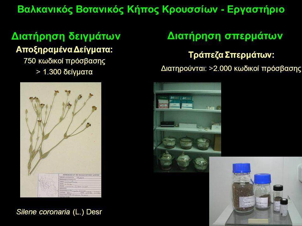 Αποξηραμένα Δείγματα: 750 κωδικοί πρόσβασης > 1.300 δείγματα Διατήρηση δειγμάτων Βαλκανικός Βοτανικός Κήπος Κρουσσίων - Εργαστήριο Silene coronaria (L.) Desr Διατήρηση σπερμάτων Τράπεζα Σπερμάτων: Διατηρούνται: >2.000 κωδικοί πρόσβασης