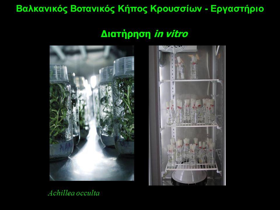 Βαλκανικός Βοτανικός Κήπος Κρουσσίων - Εργαστήριο Διατήρηση in vitro Achillea occulta