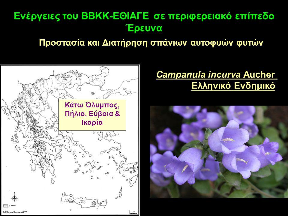 Ενέργειες του ΒΒΚΚ-ΕΘΙΑΓΕ σε περιφερειακό επίπεδο Έρευνα Προστασία και Διατήρηση σπάνιων αυτοφυών φυτών Campanula incurva Aucher Ελληνικό Ενδημικό Κάτω Όλυμπος, Πήλιο, Εύβοια & Ικαρία