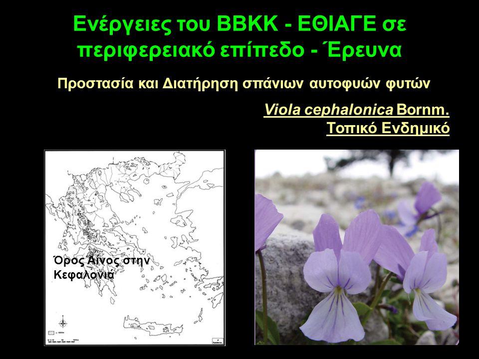Ενέργειες του ΒΒΚΚ - ΕΘΙΑΓΕ σε περιφερειακό επίπεδο - Έρευνα Προστασία και Διατήρηση σπάνιων αυτοφυών φυτών Viola cephalonica Bornm. Τοπικό Ενδημικό Ό