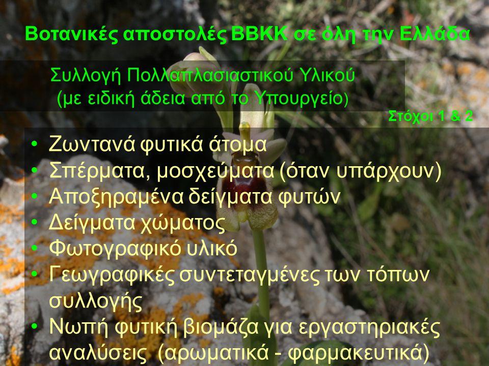 Βοτανικές αποστολές ΒΒΚΚ σε όλη την Ελλάδα Συλλογή Πολλαπλασιαστικού Υλικού (με ειδική άδεια από το Υπουργείο ) •Ζωντανά φυτικά άτομα •Σπέρματα, μοσχε