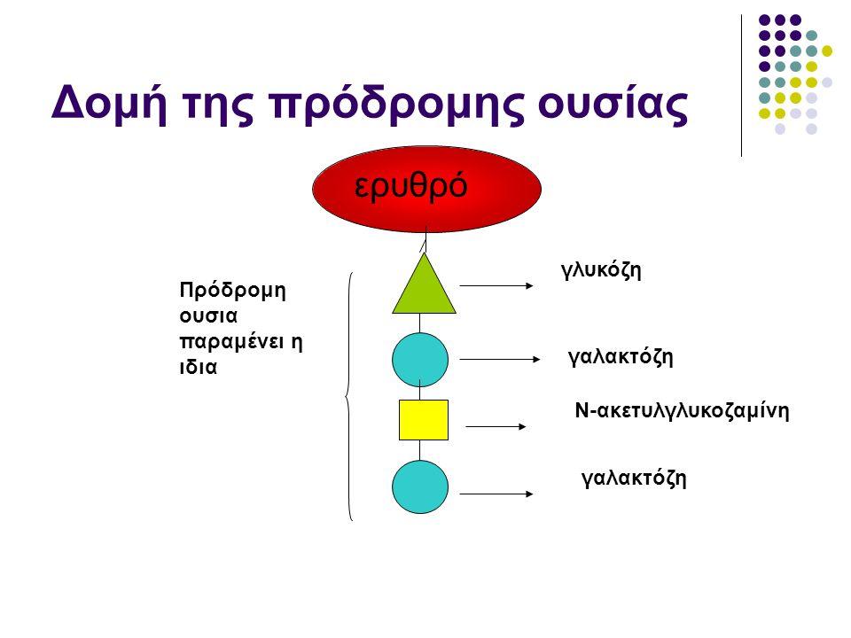 Δομή της πρόδρομης ουσίας ερυθρό Πρόδρομη ουσια παραμένει η ιδια γλυκόζη γαλακτόζη Ν-ακετυλγλυκοζαμίνη γαλακτόζη