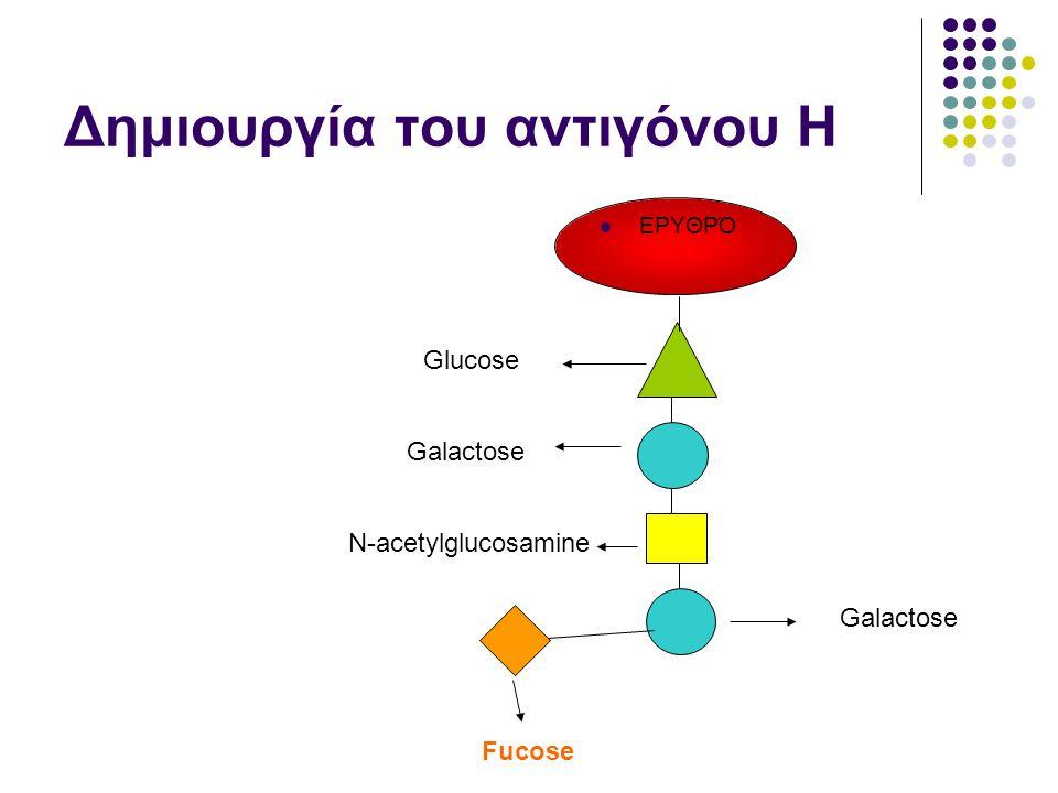 Δημιουργία του αντιγόνου Η  ΕΡΥΘΡΌ Glucose N-acetylglucosamine Galactose Fucose Galactose