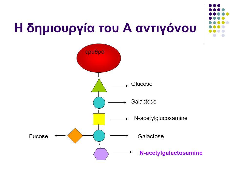 Η δημιουργία του Α αντιγόνου ερυθρό Glucose Galactose N-acetylglucosamine Galactose N-acetylgalactosamine Fucose