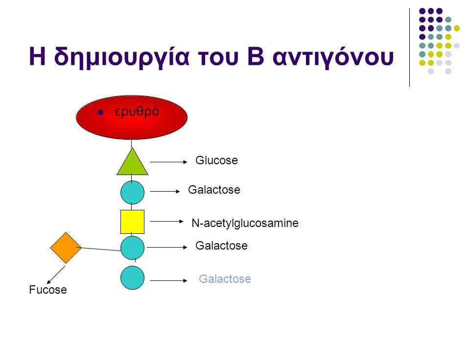 Η δημιουργία του Β αντιγόνου  ερυθρό Glucose Galactose N-acetylglucosamine Galactose Fucose