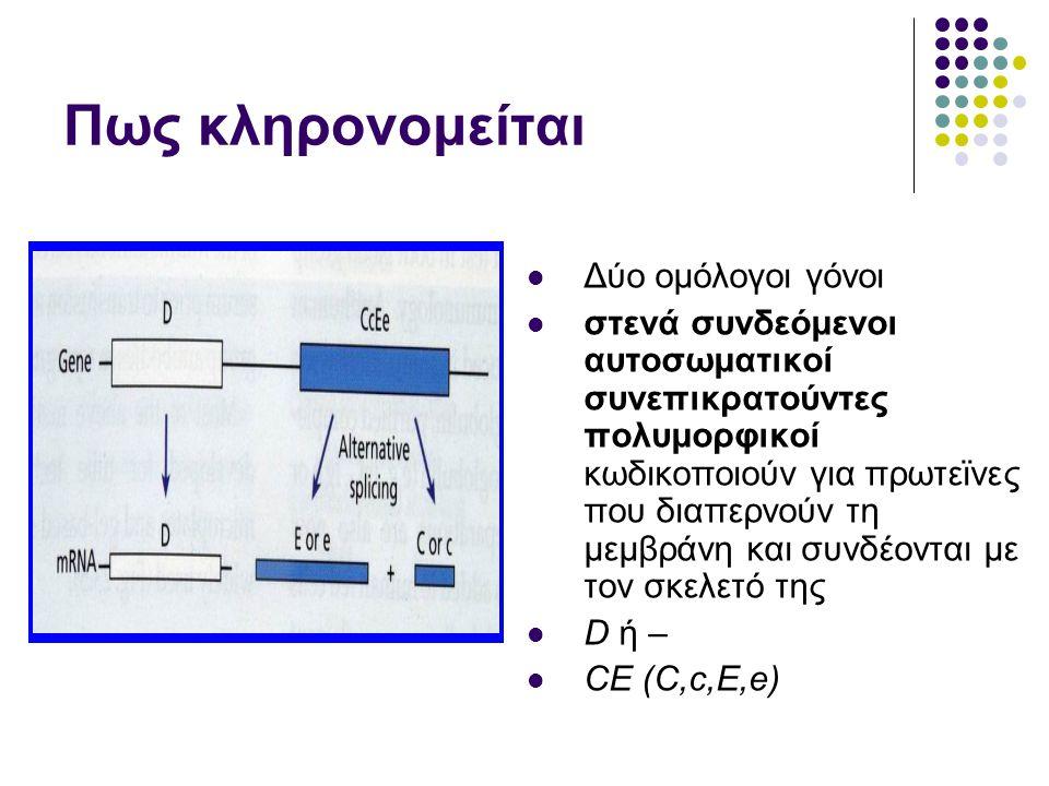 Πως κληρονομείται  Δύο ομόλογοι γόνοι  στενά συνδεόμενοι αυτοσωματικοί συνεπικρατούντες πολυμορφικοί κωδικοποιούν για πρωτεϊνες που διαπερνούν τη μεμβράνη και συνδέονται με τον σκελετό της  D ή –  CE (C,c,E,e)