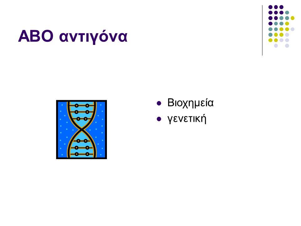 Το αντιγόνο Η Η περιεκτικότητα του αντιγόνου Η διαβαθμίζεται ανάλογα με την ομάδα O>A 2 >B>A 2 B>A 1 >A 1 B