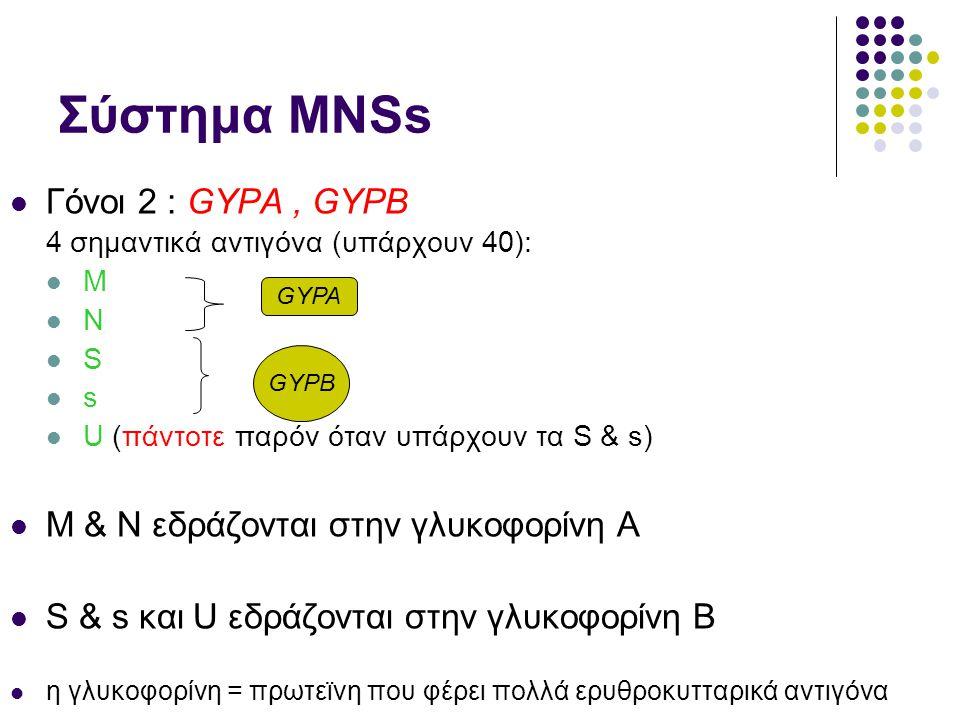 Σύστημα ΜΝSs  Γόνοι 2 : GYPA, GYPB 4 σημαντικά αντιγόνα (υπάρχουν 40):  M  N  S  s  U (πάντοτε παρόν όταν υπάρχουν τα S & s)  M & N εδράζονται στην γλυκοφορίνη Α  S & s και U εδράζονται στην γλυκοφορίνη Β  η γλυκοφορίνη = πρωτεϊνη που φέρει πολλά ερυθροκυτταρικά αντιγόνα GYPA GYPB