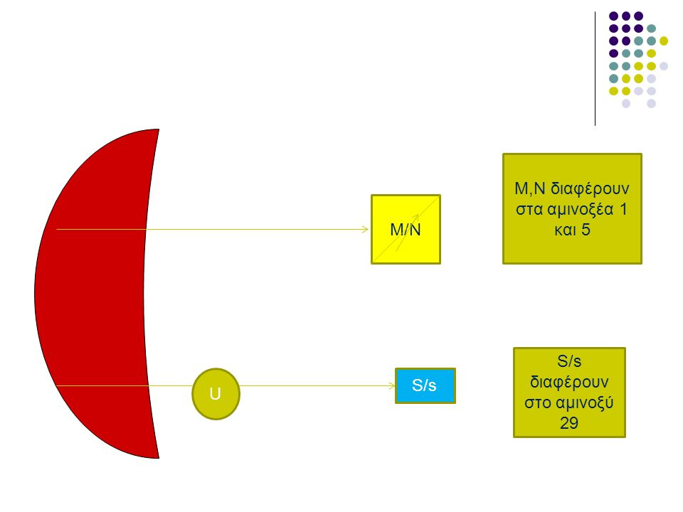 M/N S/s U M,N διαφέρουν στα αμινοξέα 1 και 5 S/s διαφέρουν στο αμινοξύ 29