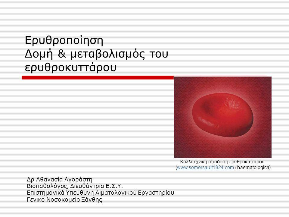 Ερυθροποίηση Δομή & μεταβολισμός του ερυθροκυττάρου Δρ Αθανασία Αγοράστη Βιοπαθολόγος, Διευθύντρια Ε.Σ.Υ. Επιστημονικά Υπεύθυνη Αιματολογικού Εργαστηρ