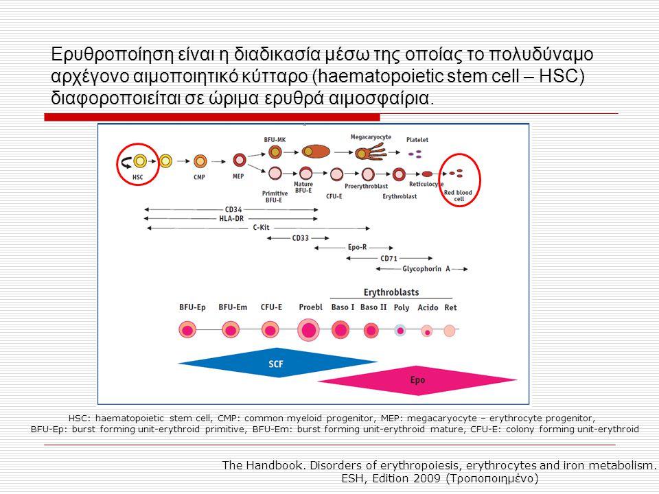 Η ερυθροποίηση ρυθμίζεται από τη συνδυασμένη επίδραση του μικροπεριβάλλοντος και των αυξητικών παραγόντων που προάγουν την επιβίωση, τον πολλαπλασιασμό και / ή τη διαφοροποίηση των προγονικών ερυθροειδών κυττάρων καθώς και πυρηνικών παραγόντων που ρυθμίζουν τη μεταγραφή γονιδίων του ερυθροειδούς φαινοτύπου.