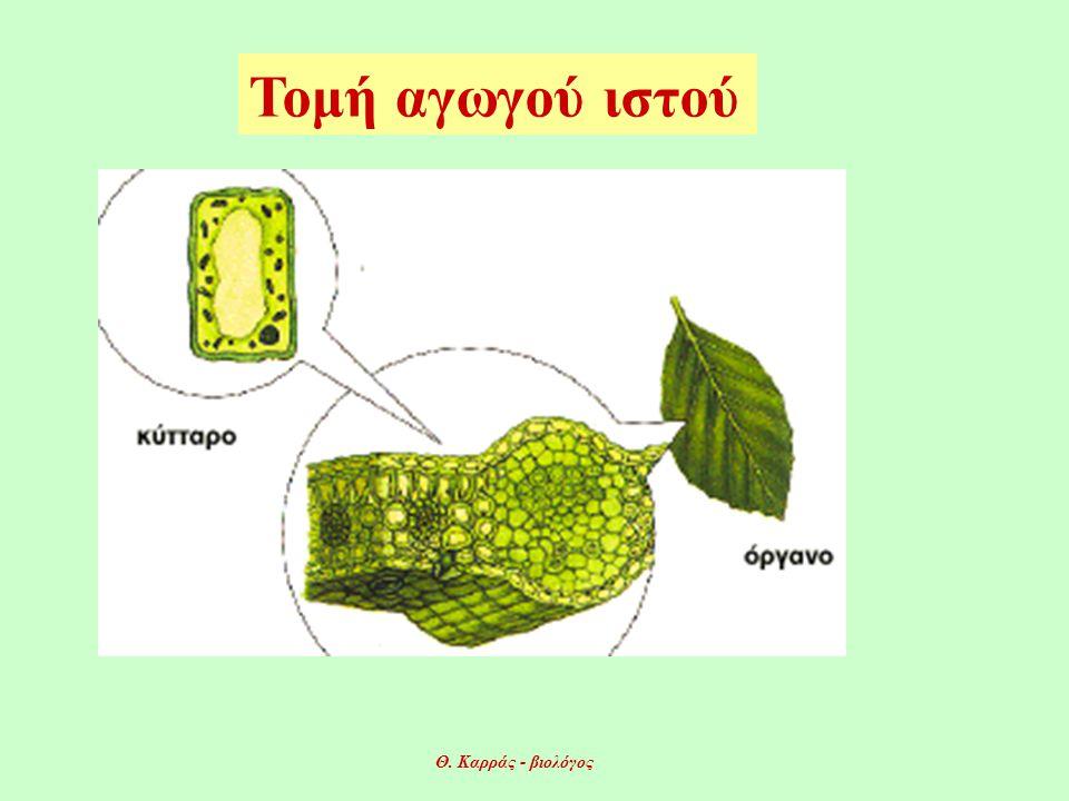 Τομή αγωγού ιστού Θ. Καρράς - βιολόγος