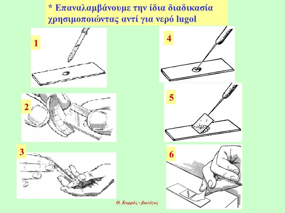 1 2 4 3 5 6 * Επαναλαμβάνουμε την ίδια διαδικασία χρησιμοποιώντας αντί για νερό lugol Θ.