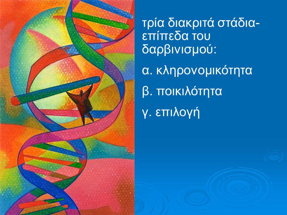 τρία διακριτά στάδια- επίπεδα του δαρβινισμού: α. κληρονομικότητα β. ποικιλότητα γ. επιλογή