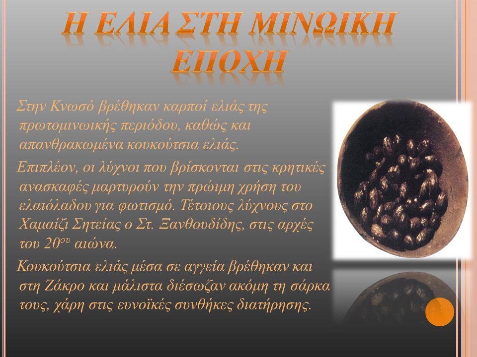 Στην Κνωσό βρέθηκαν καρποί ελιάς της πρωτομινωικής περιόδου, καθώς και απανθρακωμένα κουκούτσια ελιάς. Επιπλέον, οι λύχνοι που βρίσκονται στις κρητικέ