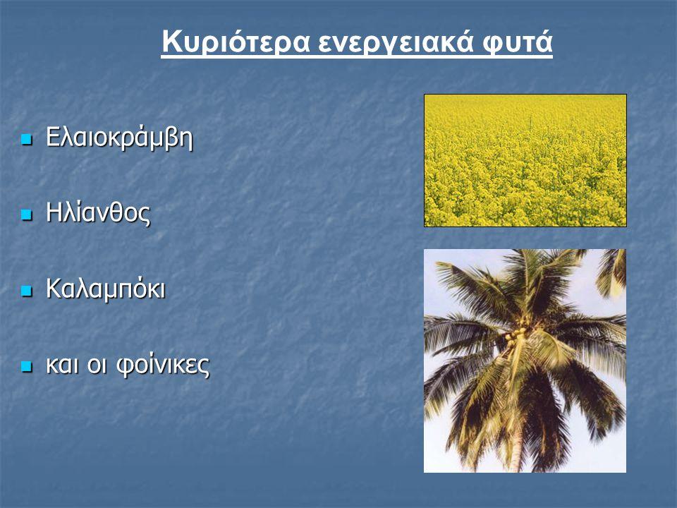 Γενικότερα:  Παράγεται από τα περισσότερα φυτικά έλαια  Αλλά είναι ουσιαστικά λίγα, αυτά που δίνουν ικανοποιητική πρώτη ύλη ανά στρέμμα καλλιεργήσιμ