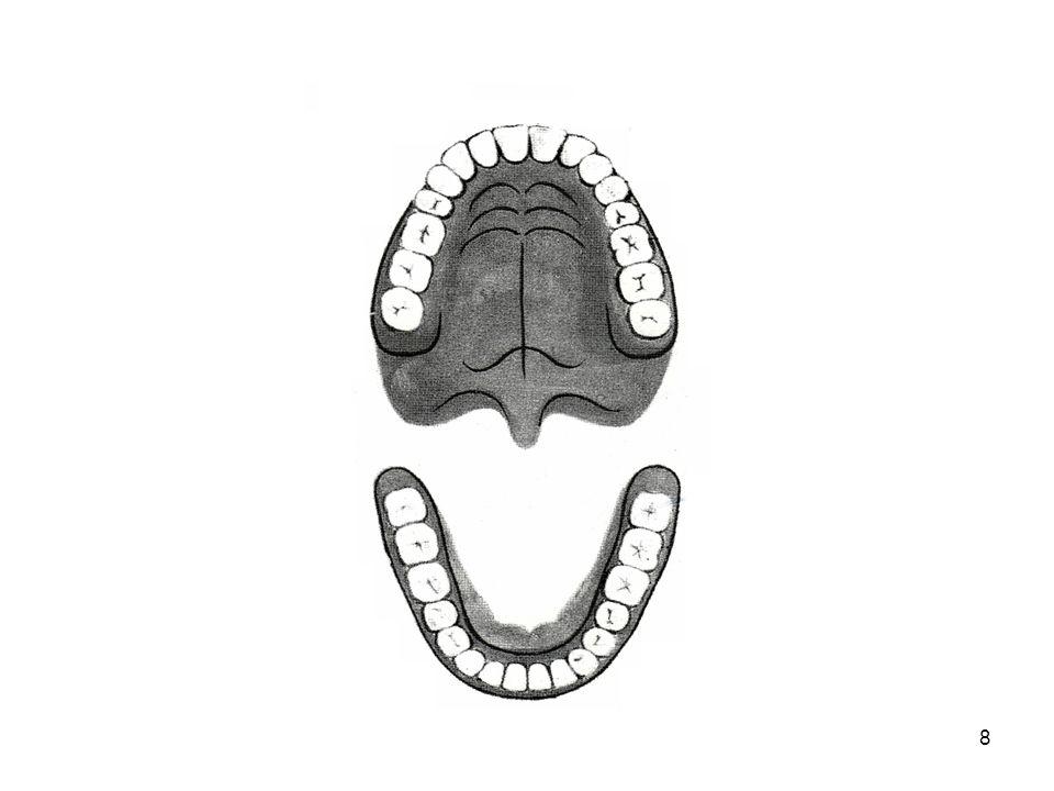 9 •Κάθε δόντι από ιστολογική άποψη αποτελείται από την αδαμαντίνη, την οδοντίνη, την οστέινη και τον πολφό.
