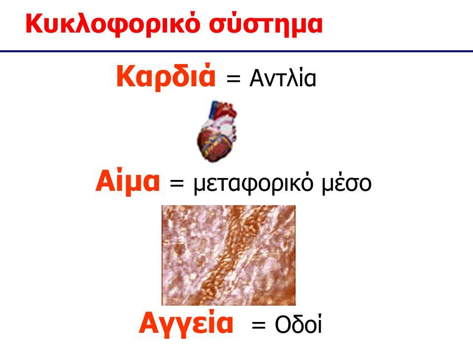 Κυκλοφορικό σύστημα Καρδιά = Αντλία Αγγεία = Οδοί Αίμα = μεταφορικό μέσο