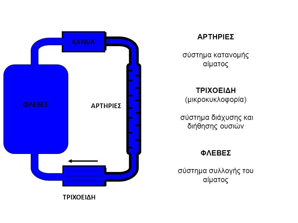 ΦΛΕΒΕΣ ΚΑΡΔΙΑ ΑΡΤΗΡΙΕΣ ΤΡΙΧΟΕΙΔΗ ΑΡΤΗΡΙΕΣ σύστημα κατανομής αίματος ΤΡΙΧΟΕΙΔΗ (μικροκυκλοφορία) σύστημα διάχυσης και διήθησης ουσιών ΦΛΕΒΕΣ σύστημα συ