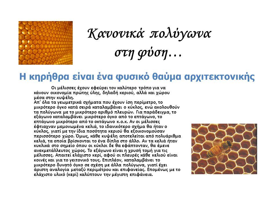 Κανονικά πολύγωνα στη φύση… Η κηρήθρα είναι ένα φυσικό θαύμα αρχιτεκτονικής Οι μέλισσες έχουν εφεύρει τον καλύτερο τρόπο για να κάνουν οικονομία πρώτη