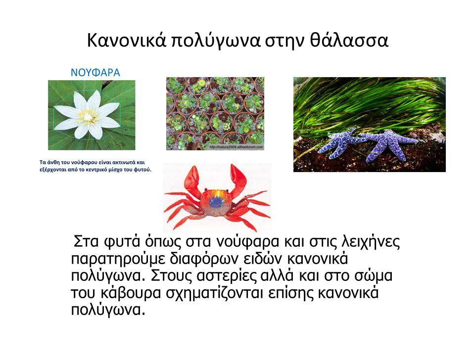Κανονικά πολύγωνα στην θάλασσα Στα φυτά όπως στα νούφαρα και στις λειχήνες παρατηρούμε διαφόρων ειδών κανονικά πολύγωνα. Στους αστερίες αλλά και στο σ
