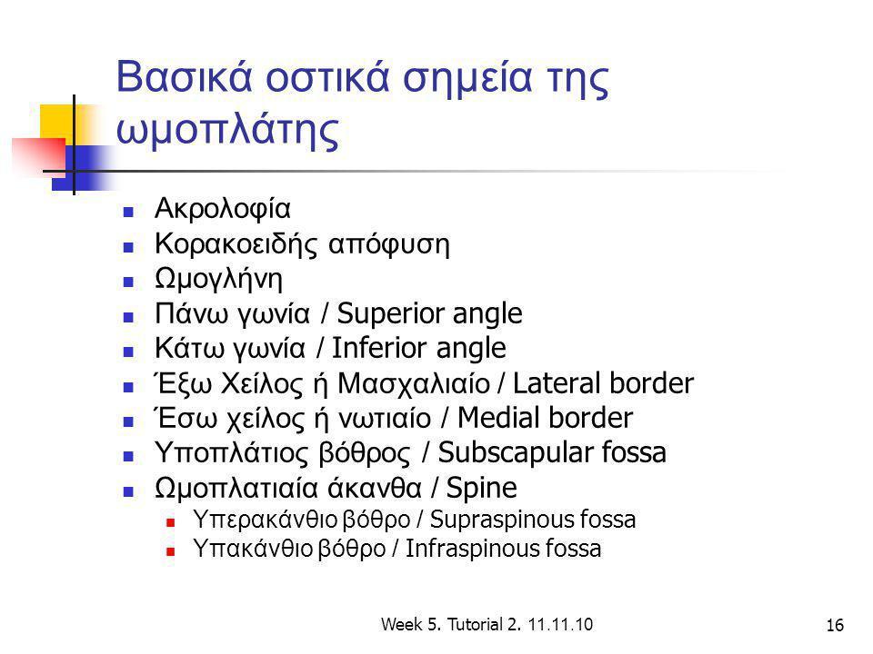 Week 5. Tutorial 2. 11.11.10 16 Βασικά οστικά σημεία της ωμοπλάτης Ακρολοφία Κορακοειδής απόφυση Ωμογλήνη Πάνω γωνία / Superior angle Κάτω γωνία / Inf