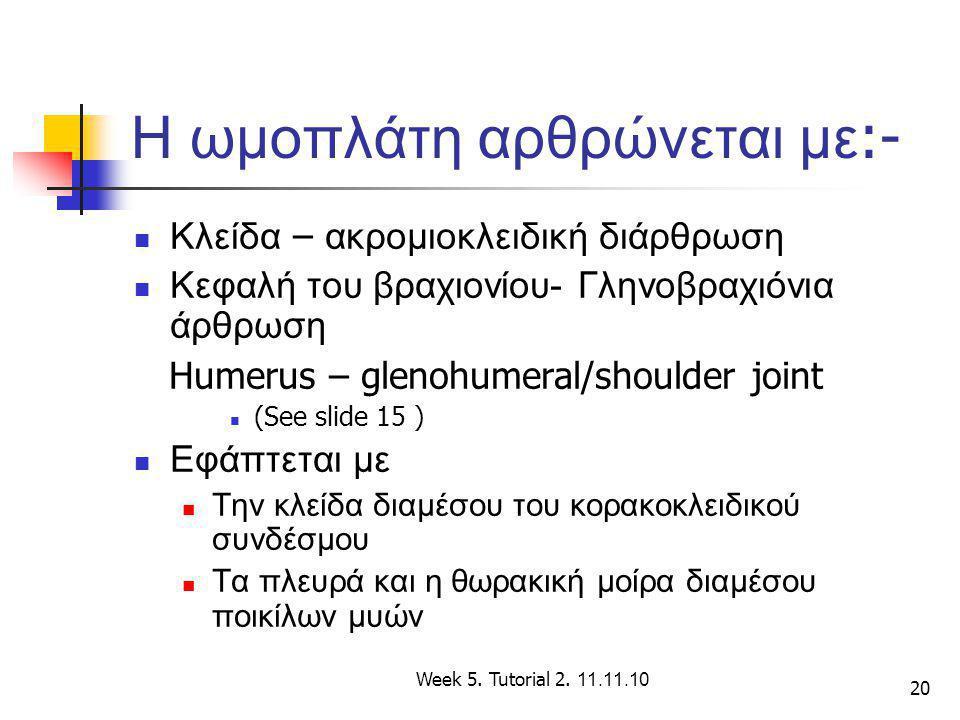 20 Η ωμοπλάτη αρθρώνεται με :- Κλείδα – ακρομιοκλειδική διάρθρωση Κεφαλή του βραχιονίου- Γληνοβραχιόνια άρθρωση Humerus – glenohumeral/shoulder joint