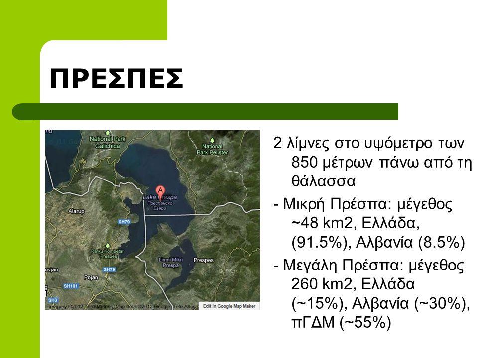 ΠΡΕΣΠΕΣ 2 λίμνες στο υψόμετρο των 850 μέτρων πάνω από τη θάλασσα - Μικρή Πρέσπα: μέγεθος ~48 km2, Ελλάδα, (91.5%), Αλβανία (8.5%) - Μεγάλη Πρέσπα: μέγεθος 260 km2, Ελλάδα (~15%), Αλβανία (~30%), πΓΔΜ (~55%)