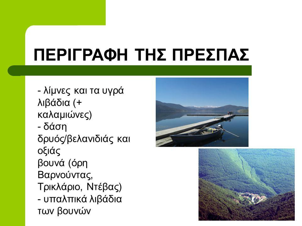 ΠΕΡΙΓΡΑΦΗ ΤΗΣ ΠΡΕΣΠΑΣ - λίμνες και τα υγρά λιβάδια (+ καλαμιώνες) - δάση δρυός/βελανιδιάς και οξιάς βουνά (όρη Βαρνούντας, Τρικλάριο, Ντέβας) - υπαλπικά λιβάδια των βουνών
