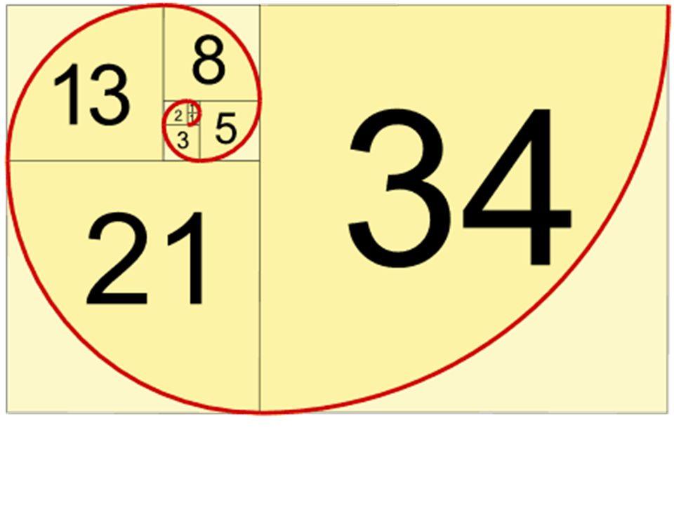 Η ακολουθία Fibonacci στη φύση Η ακολουθία Fibonacci συναντάται συχνά στο φυσικό περιβάλλον.
