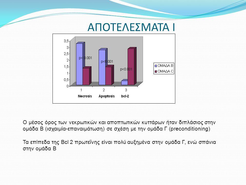ΑΠΟΤΕΛΕΣΜΑΤΑ Ι Ο μέσος όρος των νεκρωτικών και αποπτωτικών κυττάρων ήταν διπλάσιος στην ομάδα Β (ισχαιμία-επαναιμάτωση) σε σχέση με την ομάδα Γ (preco