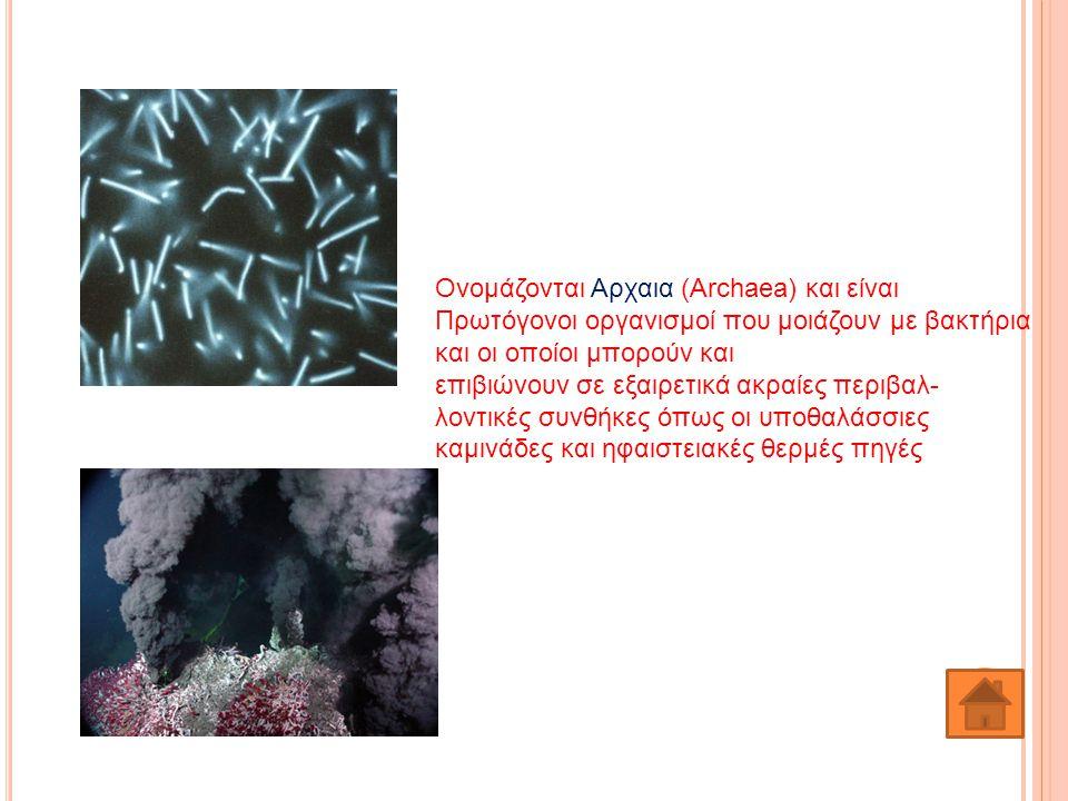 Ονομάζονται Αρχαια (Archaea) και είναι Πρωτόγονοι οργανισμοί που μοιάζουν με βακτήρια και οι οποίοι μπορούν και επιβιώνουν σε εξαιρετικά ακραίες περιβ