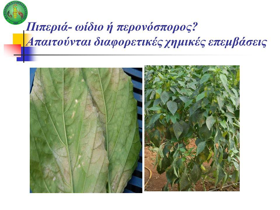 Πιπεριά- ωίδιο ή περονόσπορος? Απαιτούνται διαφορετικές χημικές επεμβάσεις