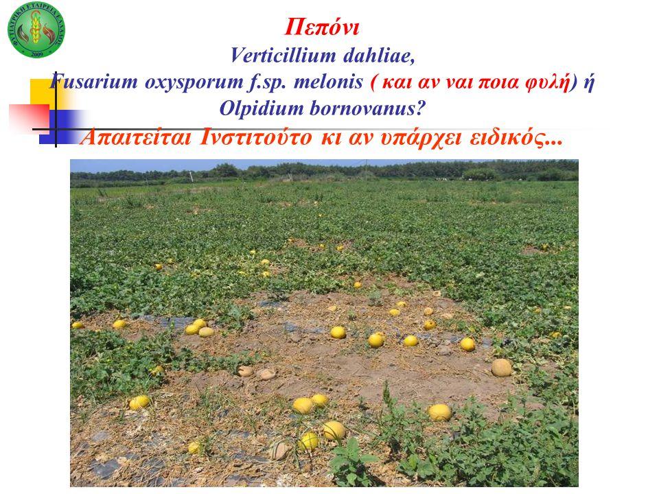 Πεπόνι Verticillium dahliae, Fusarium oxysporum f.sp. melonis ( και αν ναι ποια φυλή) ή Olpidium bornovanus? Απαιτείται Ινστιτούτο κι αν υπάρχει ειδικ