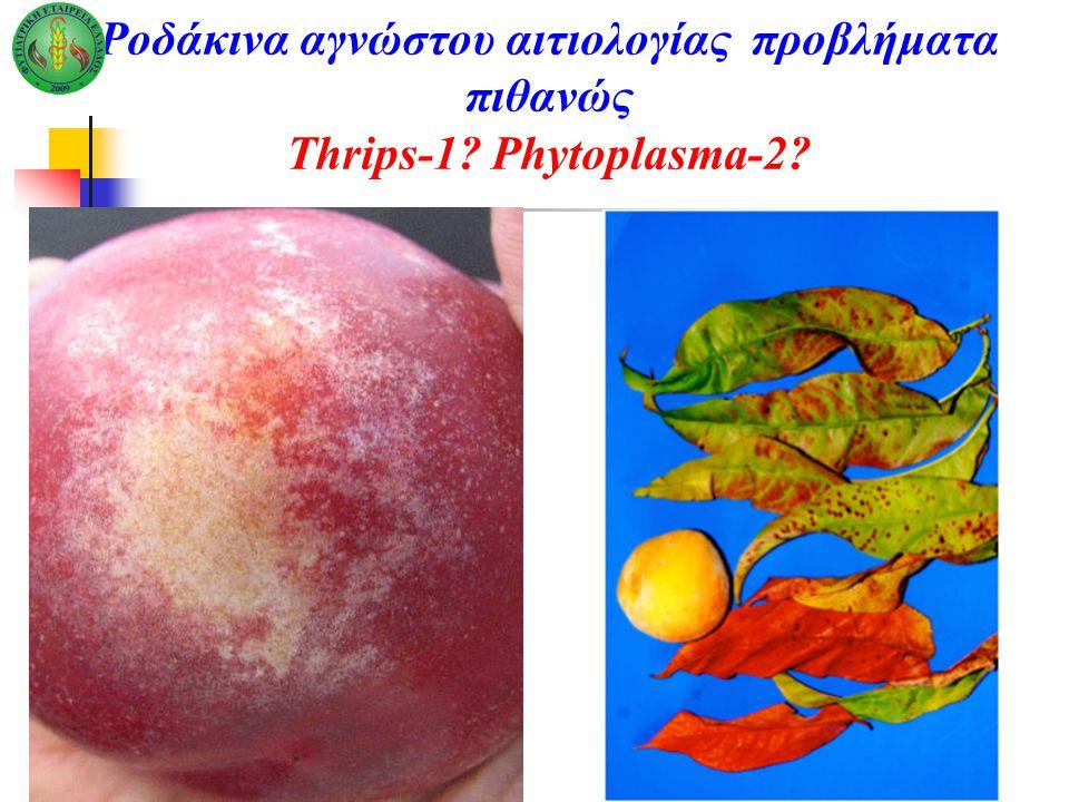 Ροδάκινα αγνώστου αιτιολογίας προβλήματα πιθανώς Thrips-1? Phytoplasma-2?