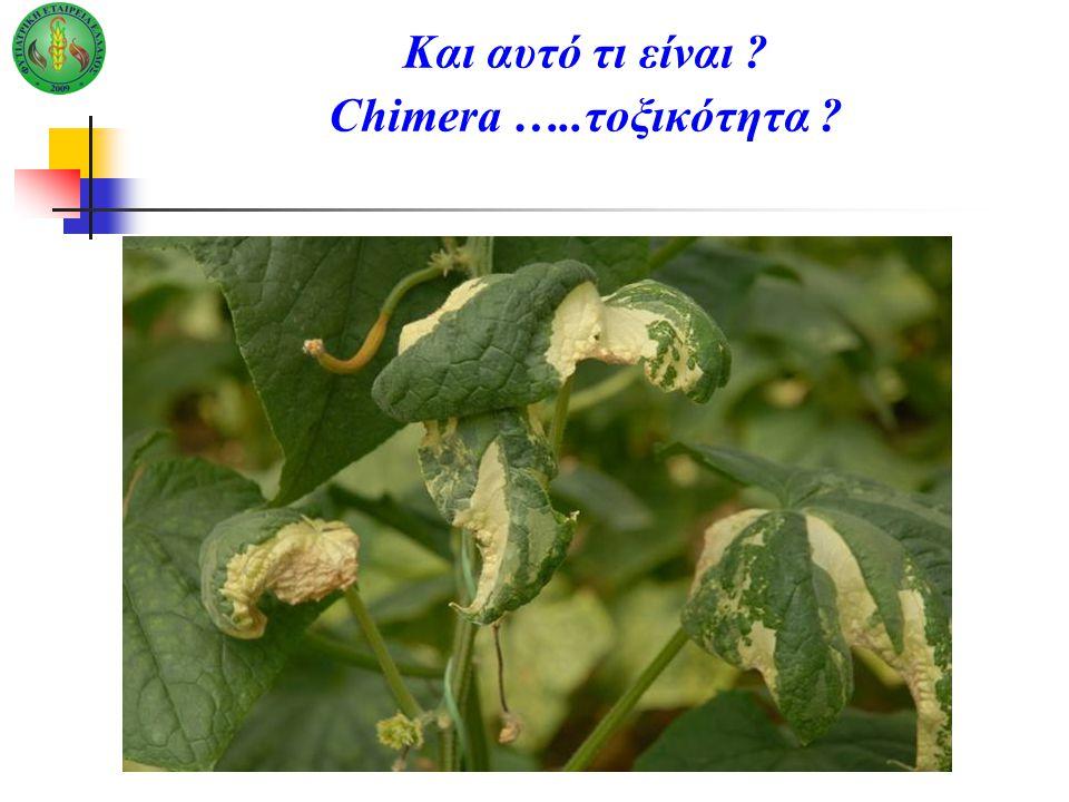 Και αυτό τι είναι ? Chimera …..τοξικότητα ?