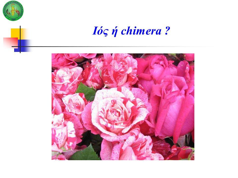 Ιός ή chimera ?