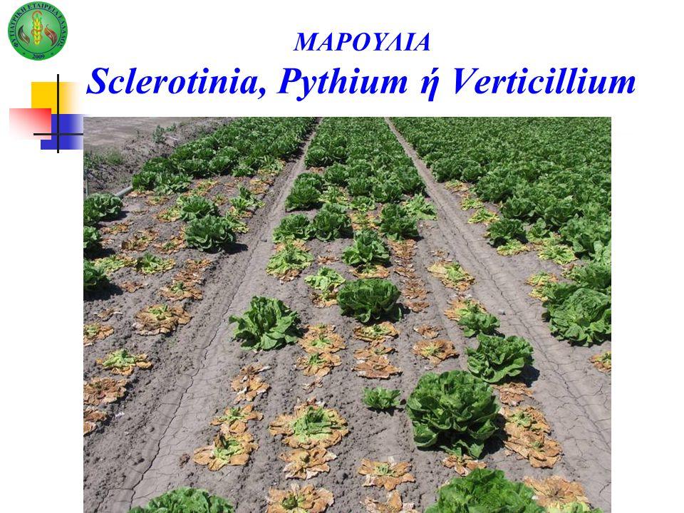ΜΑΡΟΥΛΙΑ Sclerotinia, Pythium ή Verticillium