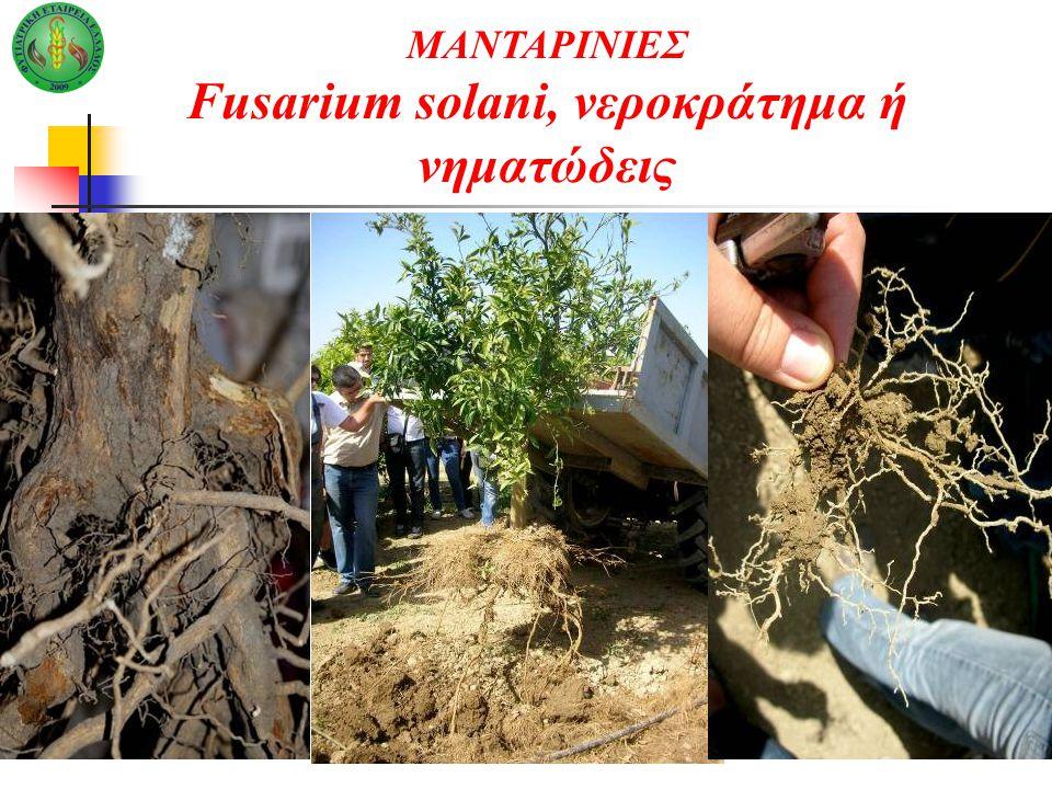 ΜΑΝΤΑΡΙΝΙΕΣ Fusarium solani, νεροκράτημα ή νηματώδεις