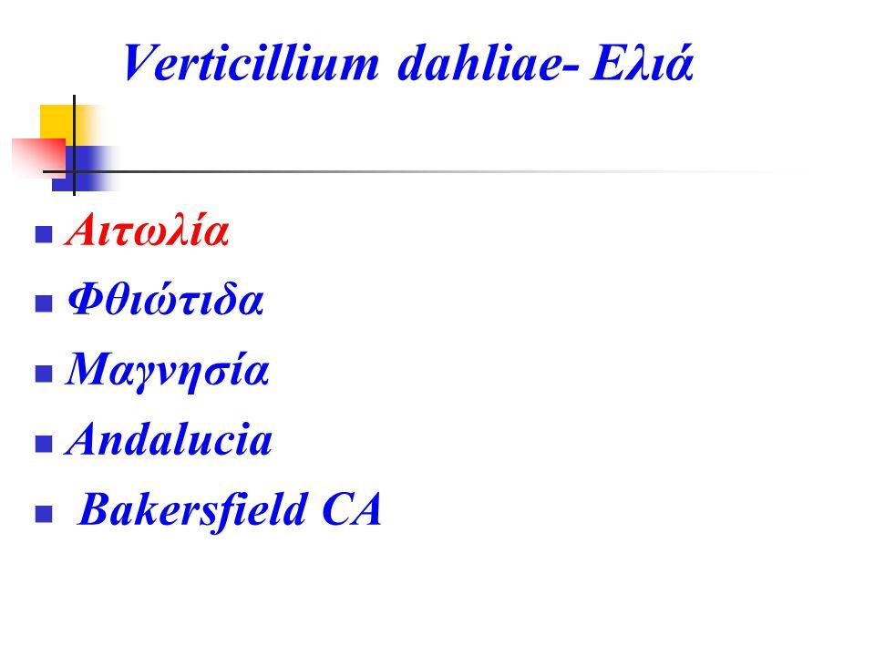 Verticillium dahliae- Ελιά Αιτωλία Φθιώτιδα Μαγνησία Andalucia Bakersfield CA