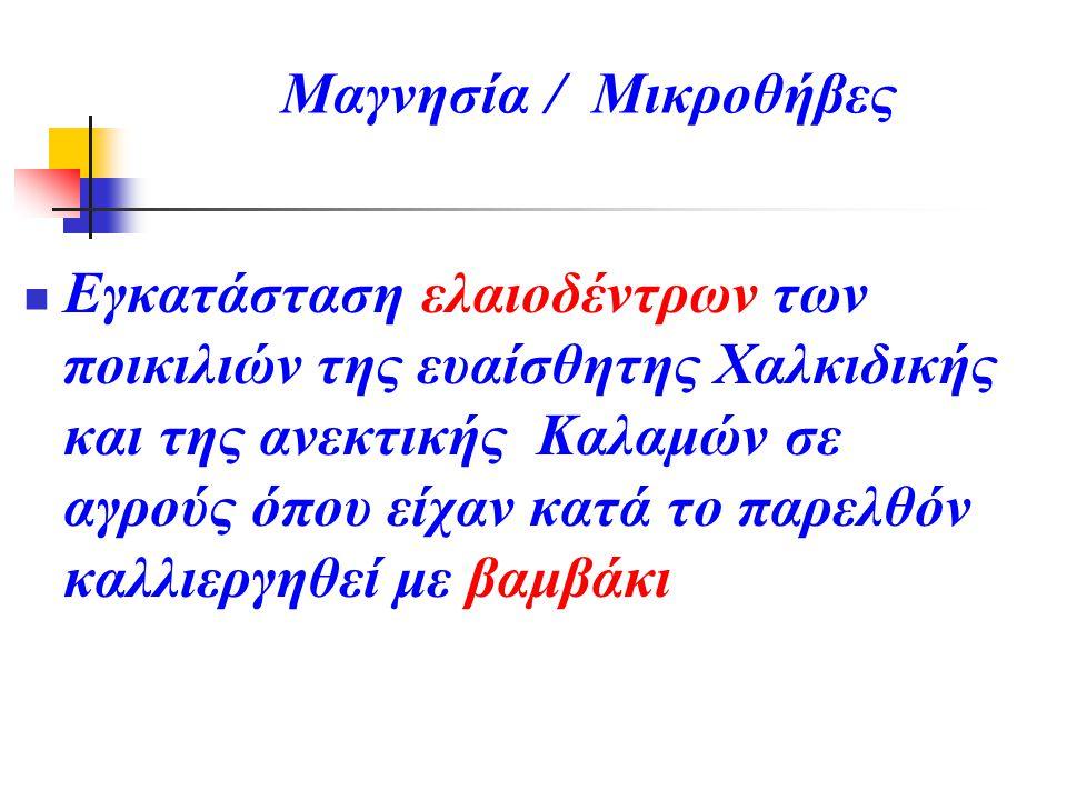 Μαγνησία / Μικροθήβες Εγκατάσταση ελαιοδέντρων των ποικιλιών της ευαίσθητης Χαλκιδικής και της ανεκτικής Καλαμών σε αγρούς όπου είχαν κατά το παρελθόν
