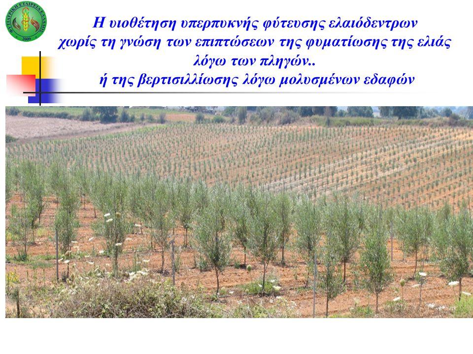 Η υιοθέτηση υπερπυκνής φύτευσης ελαιόδεντρων χωρίς τη γνώση των επιπτώσεων της φυματίωσης της ελιάς λόγω των πληγών.. ή της βερτισιλλίωσης λόγω μολυσμ