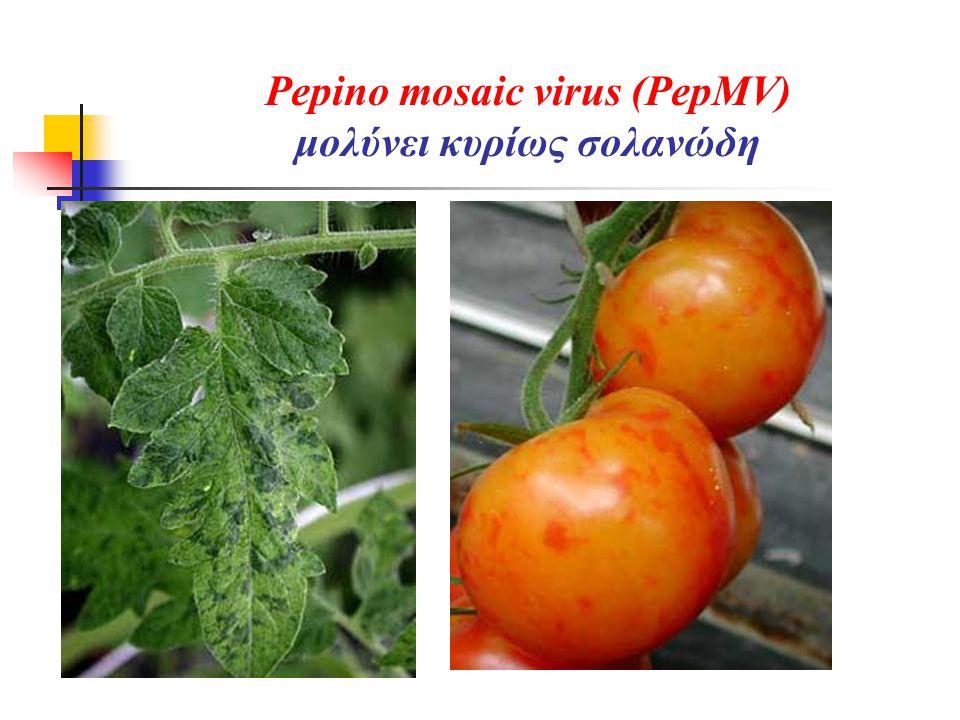 Pepino mosaic virus (PepMV) μολύνει κυρίως σολανώδη