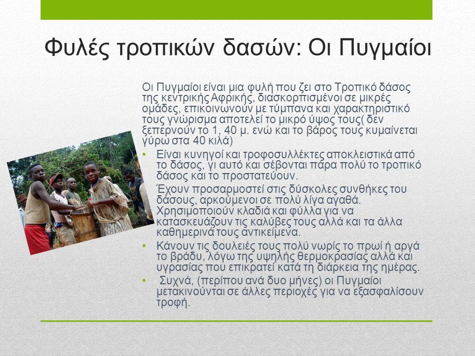 Φυλές τροπικών δασών: Οι Πυγμαίοι Οι Πυγμαίοι είναι μια φυλή που ζει στο Τροπικό δάσος της κεντρικής Αφρικής, διασκορπισμένοι σε μικρές ομάδες, επικοι