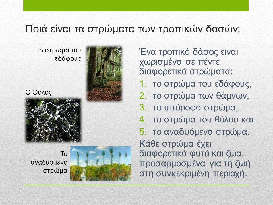 Ποιά είναι τα στρώματα των τροπικών δασών; Ένα τροπικό δάσος είναι χωρισμένο σε πέντε διαφορετικά στρώματα: 1.το στρώμα του εδάφους, 2.το στρώμα των θ