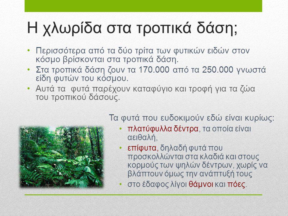 H χλωρίδα στα τροπικά δάση; Τα φυτά που ευδοκιμούν εδώ είναι κυρίως: πλατύφυλλα δέντρα, τα οποία είναι αειθαλή, επίφυτα, δηλαδή φυτά που προσκολλώνται
