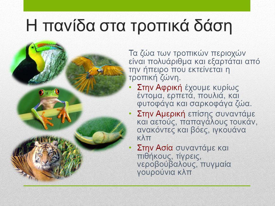Η πανίδα στα τροπικά δάση Τα ζώα των τροπικών περιοχών είναι πολυάριθμα και εξαρτάται από την ήπειρο που εκτείνεται η τροπική ζώνη. Στην Αφρική έχουμε