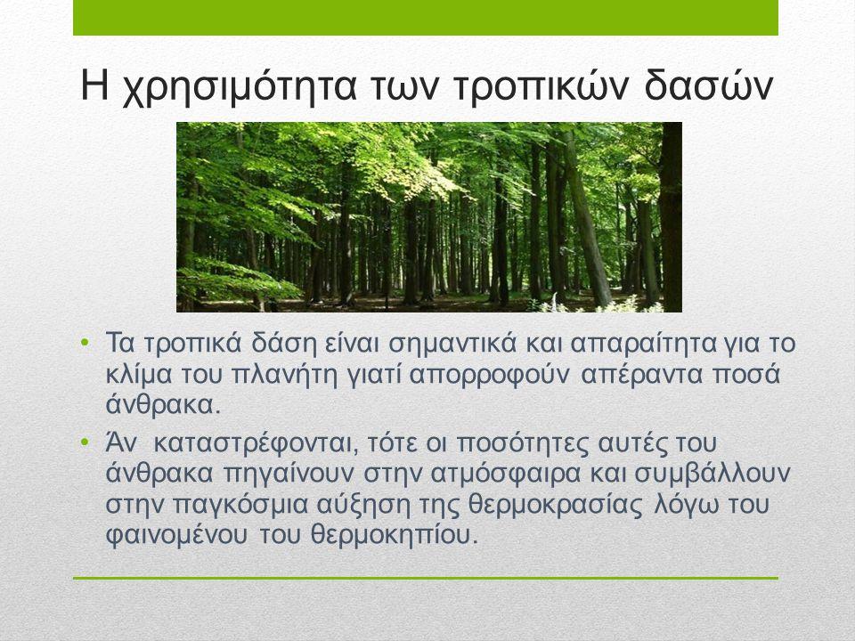 Η χρησιμότητα των τροπικών δασών Τα τροπικά δάση είναι σημαντικά και απαραίτητα για το κλίμα του πλανήτη γιατί απορροφούν απέραντα ποσά άνθρακα. Άν κα