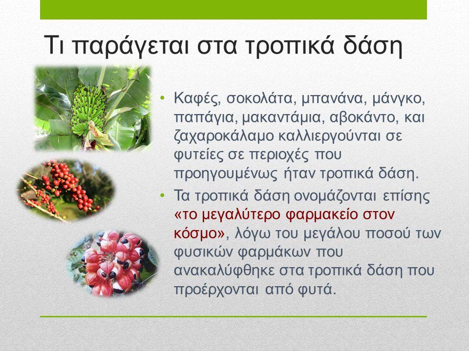 Τι παράγεται στα τροπικά δάση Καφές, σοκολάτα, μπανάνα, μάνγκο, παπάγια, μακαντάμια, αβοκάντο, και ζαχαροκάλαμο καλλιεργούνται σε φυτείες σε περιοχές