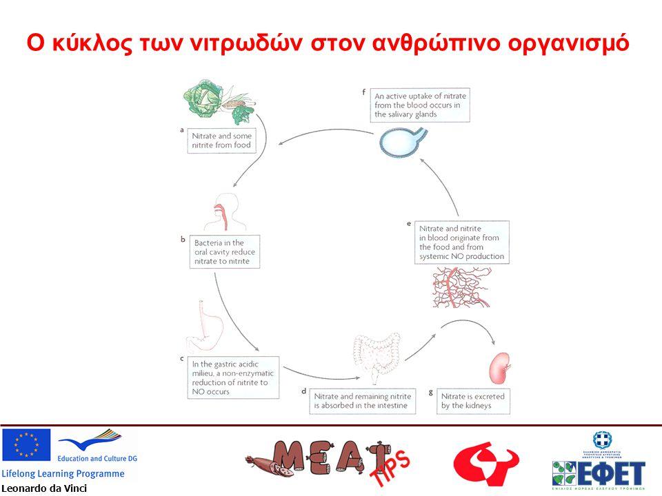Leonardo da Vinci Ο κύκλος των νιτρωδών στον ανθρώπινο οργανισμό